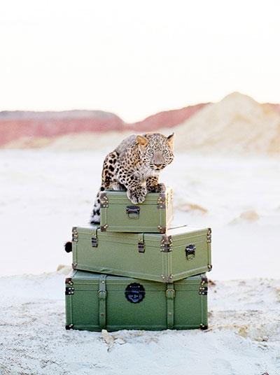 figaro-muenchen-friseur-collections-safari-07